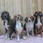 Voor elke hond  een gouden toekomst